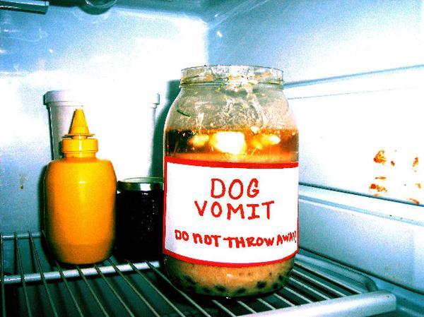 dog-vomit