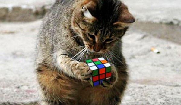Cat-With-Rubiks-Cube-600x350